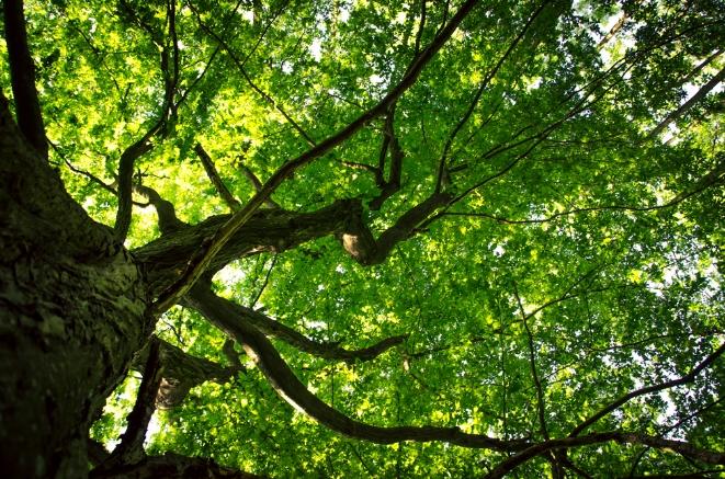 leina_trees.jpg