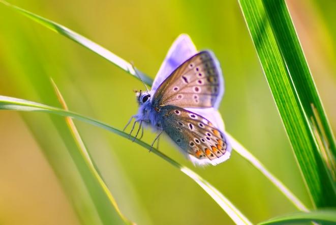 leina_butterfly.jpg