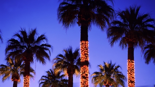 christmas-lights-palmtree-leina.jpg