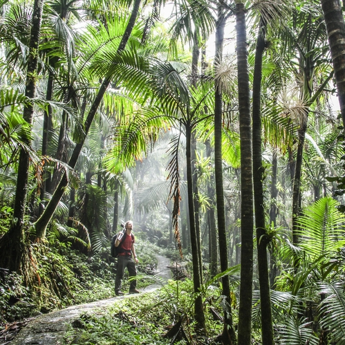Filming in the palm forest | El Yunque National Park, Puerto Rico