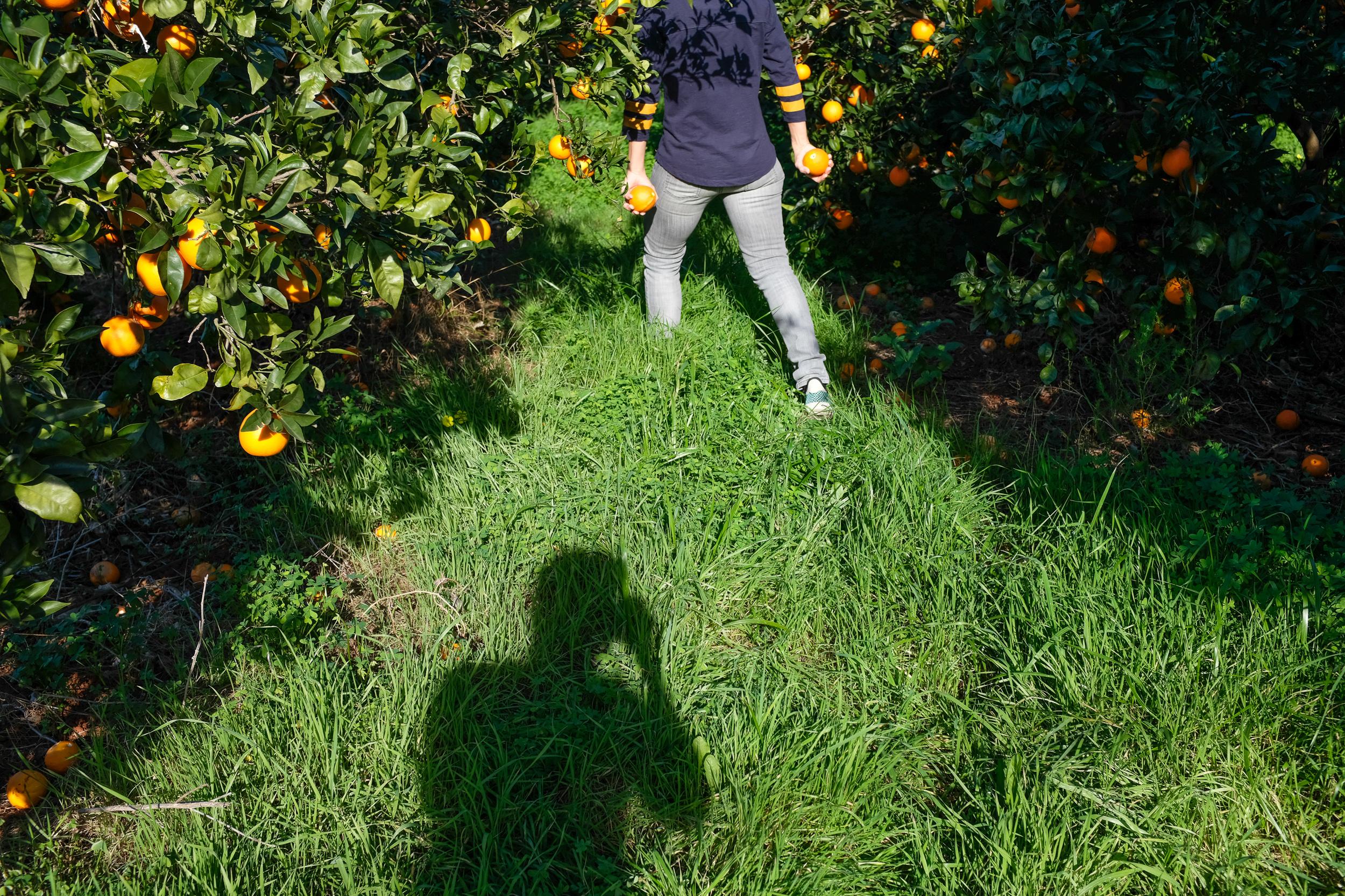 #Picking Oranges -