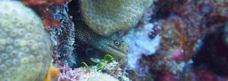 Moray eels found while snorkelling