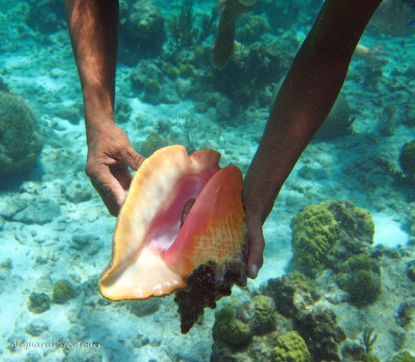 CONCH - GRAND CAYMAN