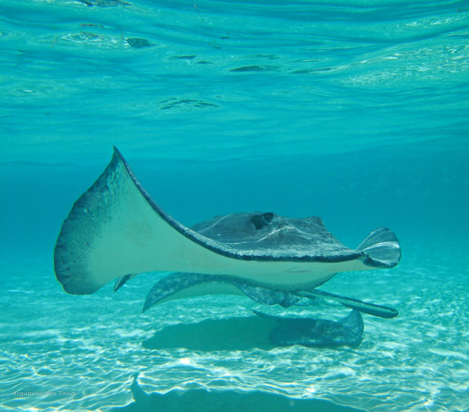 STINGRAY GREETINGS