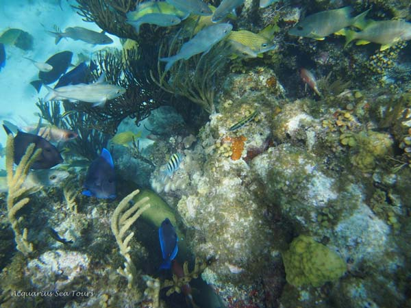 Grand Cayman offers many beautiful sites for snorkelling