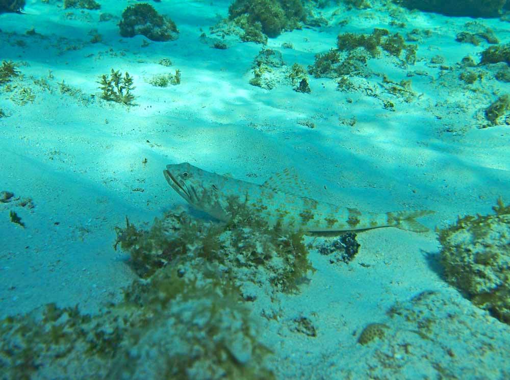 Best snorkeling in Grand Cayman