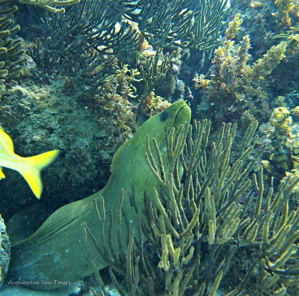 Best snorkeling in Grand Cayman