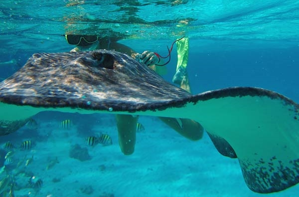 Best snorkel sites in Grand Cayman