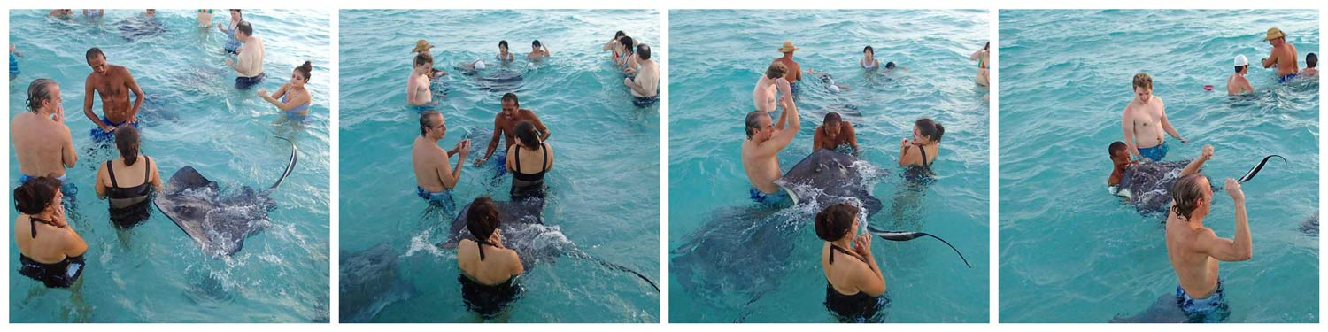 Best tour to Stingray City Grand Cayman