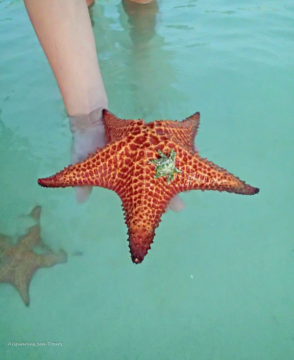 MOMMY STARFISH