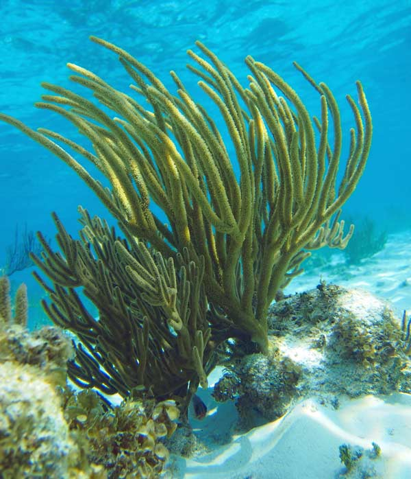 Best snorkelling sites in Grand Cayman