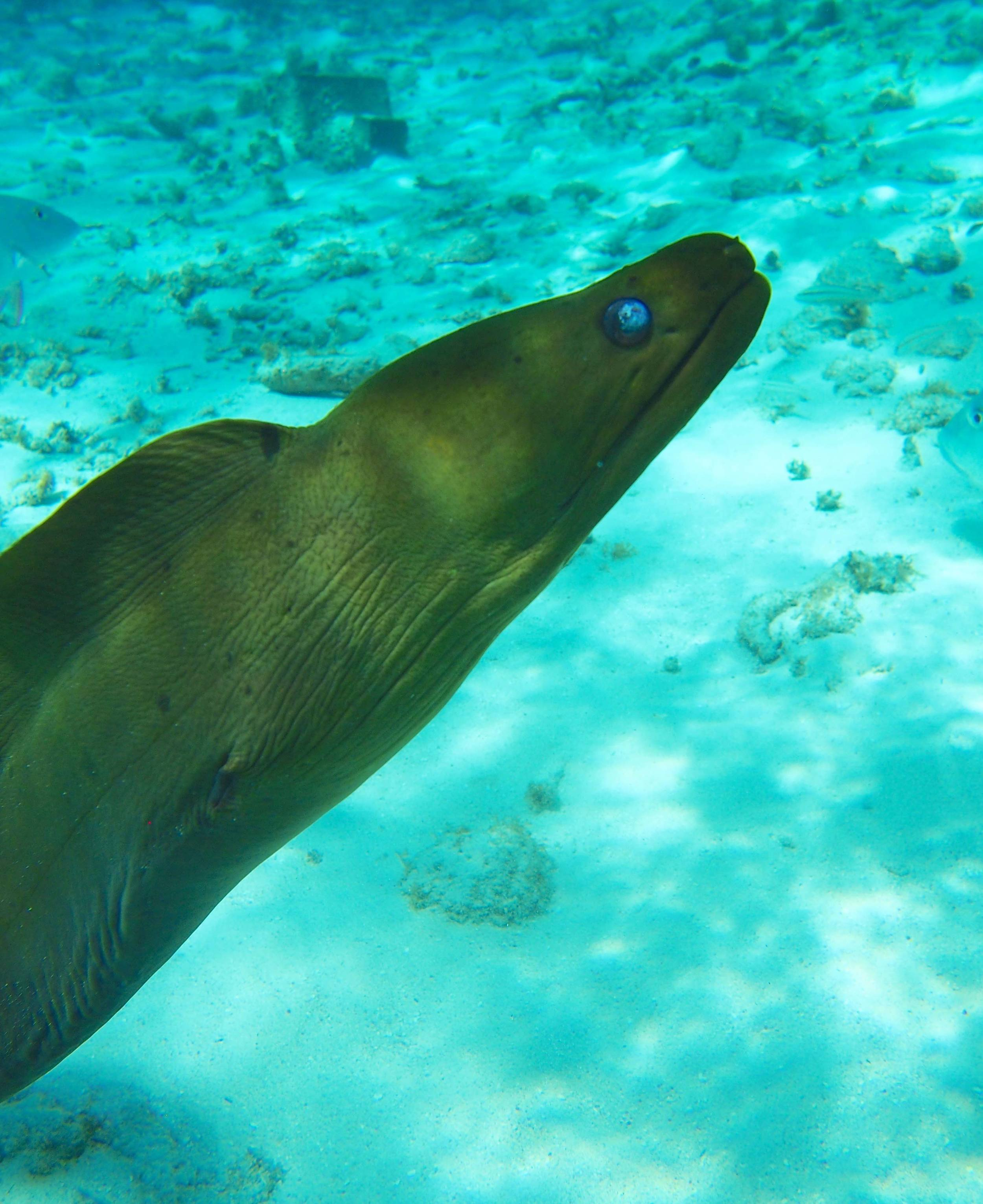 The Moray Eel at Grand Cayman's Reef - ain't she a beauty?