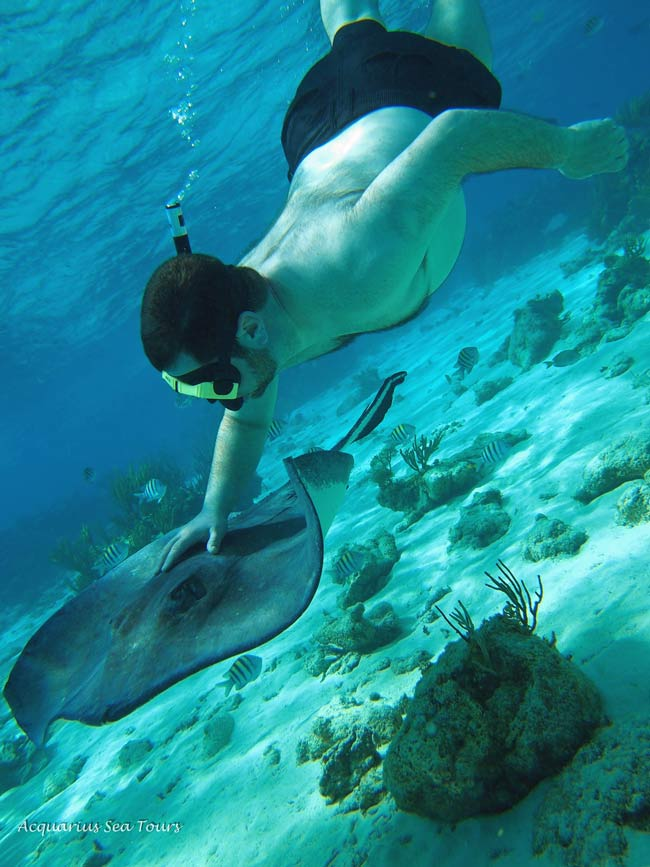 Our guest enjoys the company of a stingray during the snorkelling stop