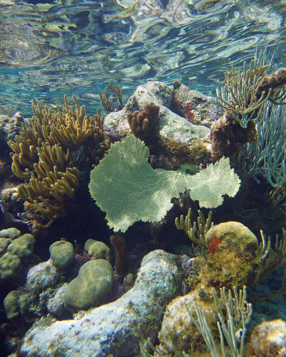 The Reef in Grand Cayman - what conditions!