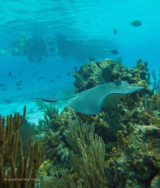Things to do on Grand Cayman