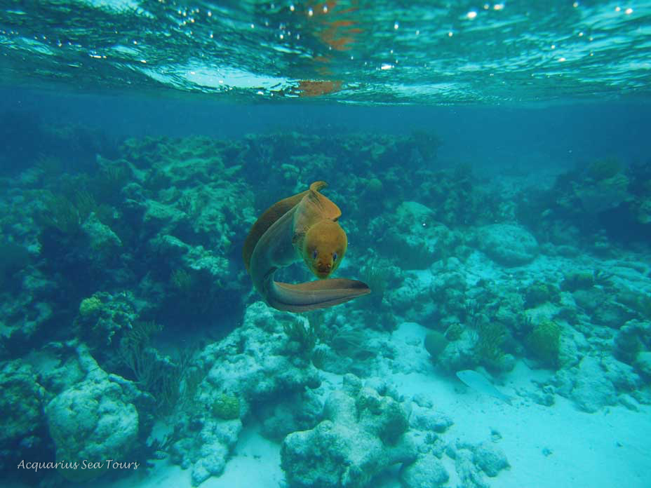 reef-grand-cayman-29041503