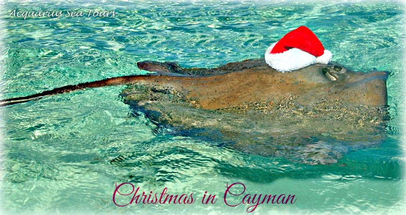 Everyone gets into the Christmas mood in Grand Cayman ....