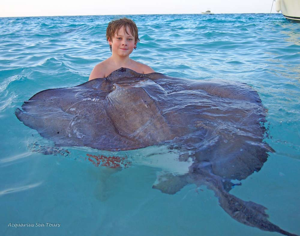 What makes us happy ... a snuggling stingray and a smiling guest who will never forget this moment