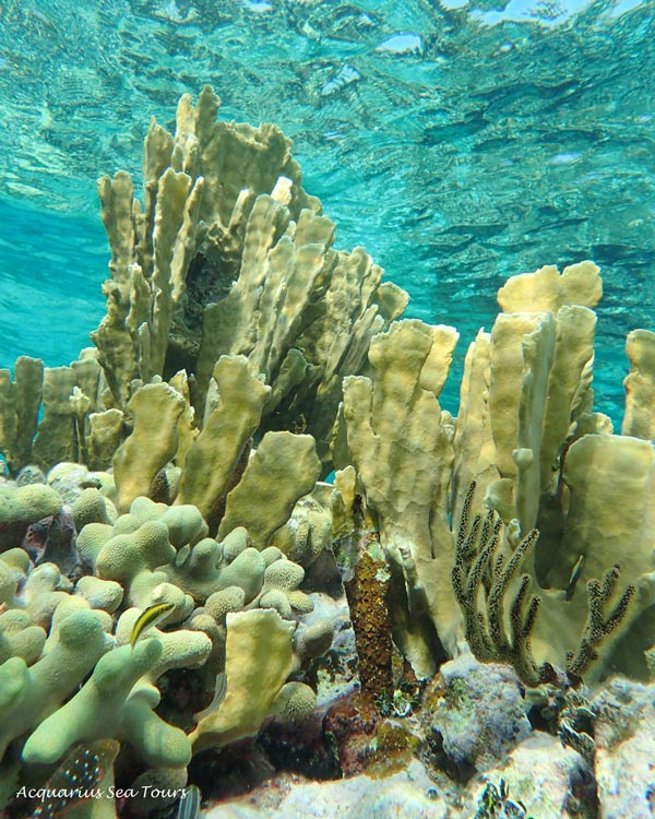 GRAND CAYMAN REEF