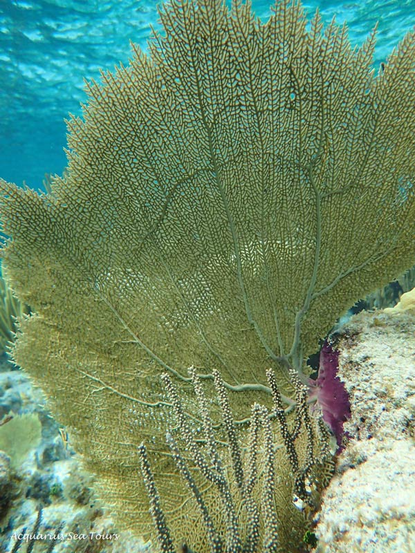 CORAL SNORKELLING GRAND CAYMAN
