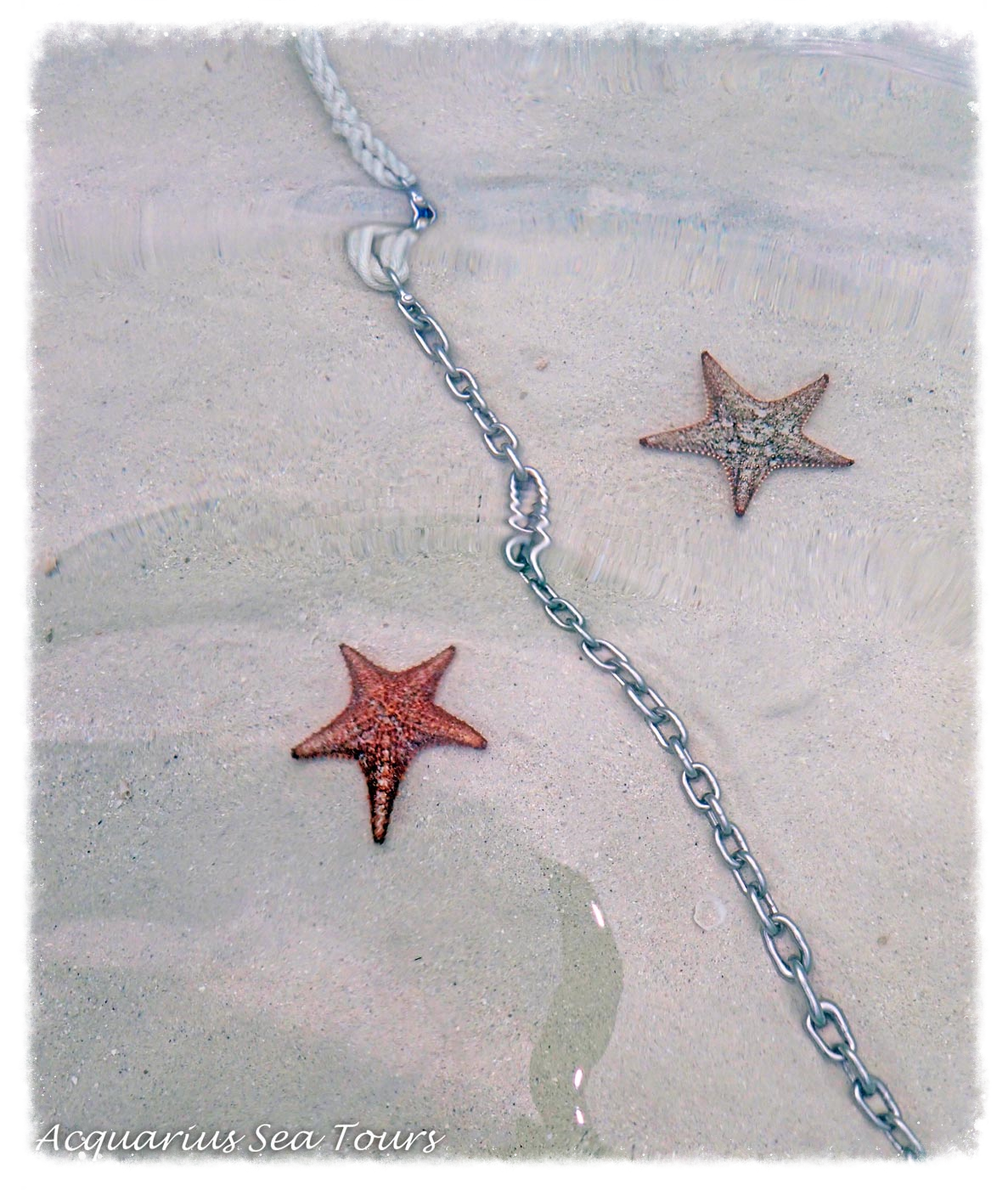 Moody skies but awesome water clarity yesterday ... anchor line & Sea Stars at Starfish Point