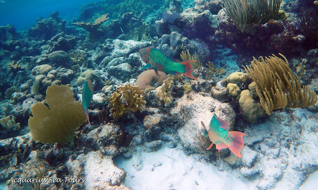 Follow my leader with Parrotfish