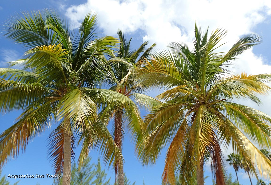 Even the skies and trees put on extra sparkle for us - Starfish Point in Grand Cayman