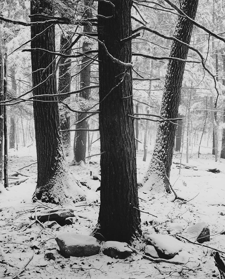 Catskill Mountains winter woods scene