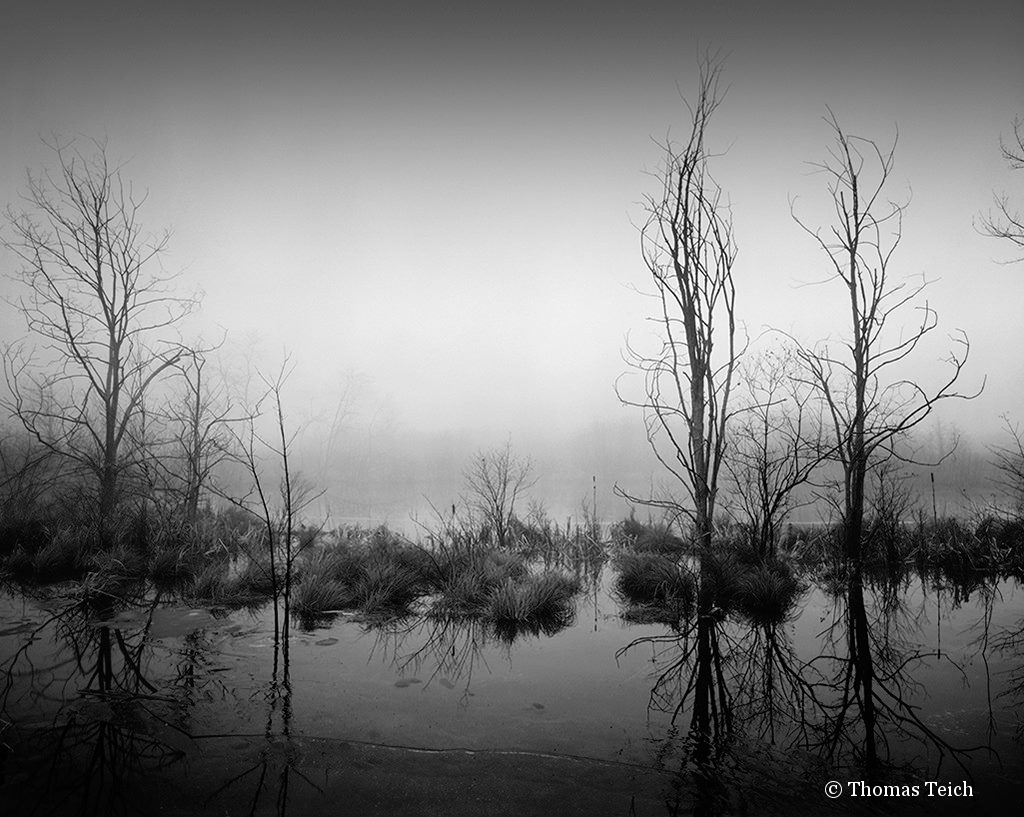 """Trees, marsh, fog"" in the Catskill Mountains of New York"