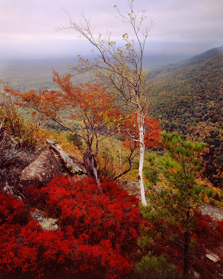 Thomas Teich Photographic Arts, autumn foliage, Catskill Mountains