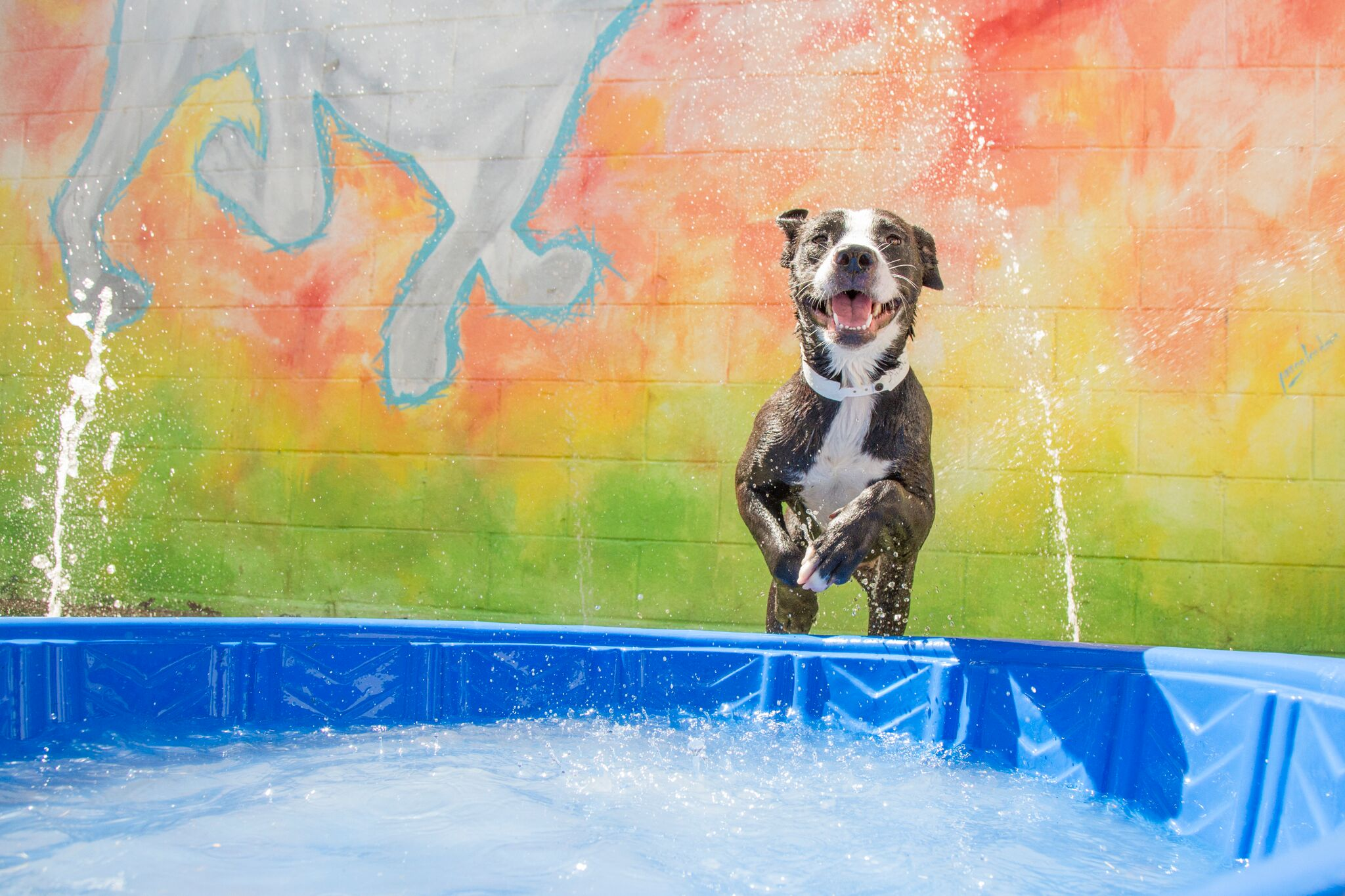Molly enrichment water pool play (8)_preview.jpeg