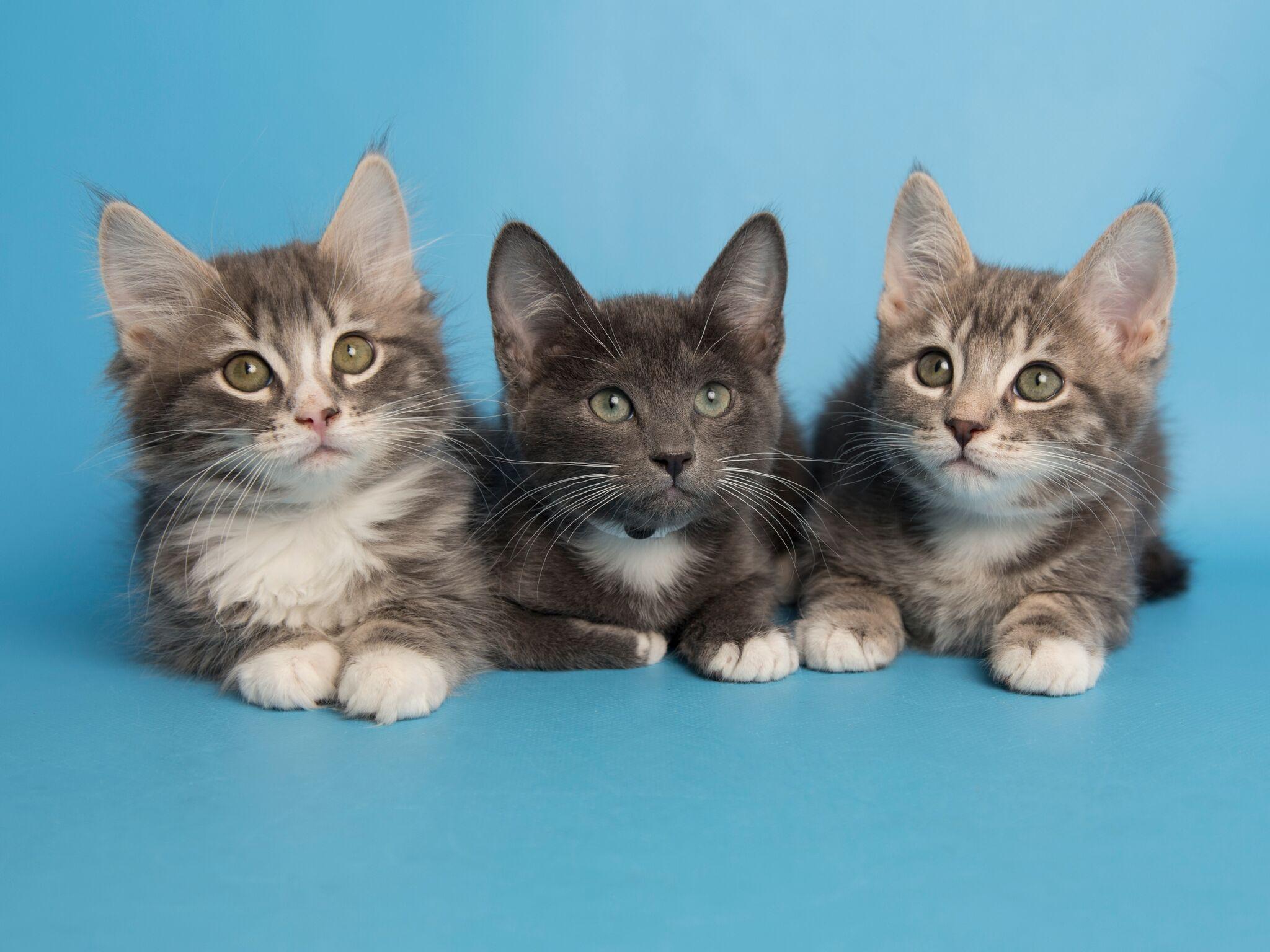Kittens_preview.jpeg