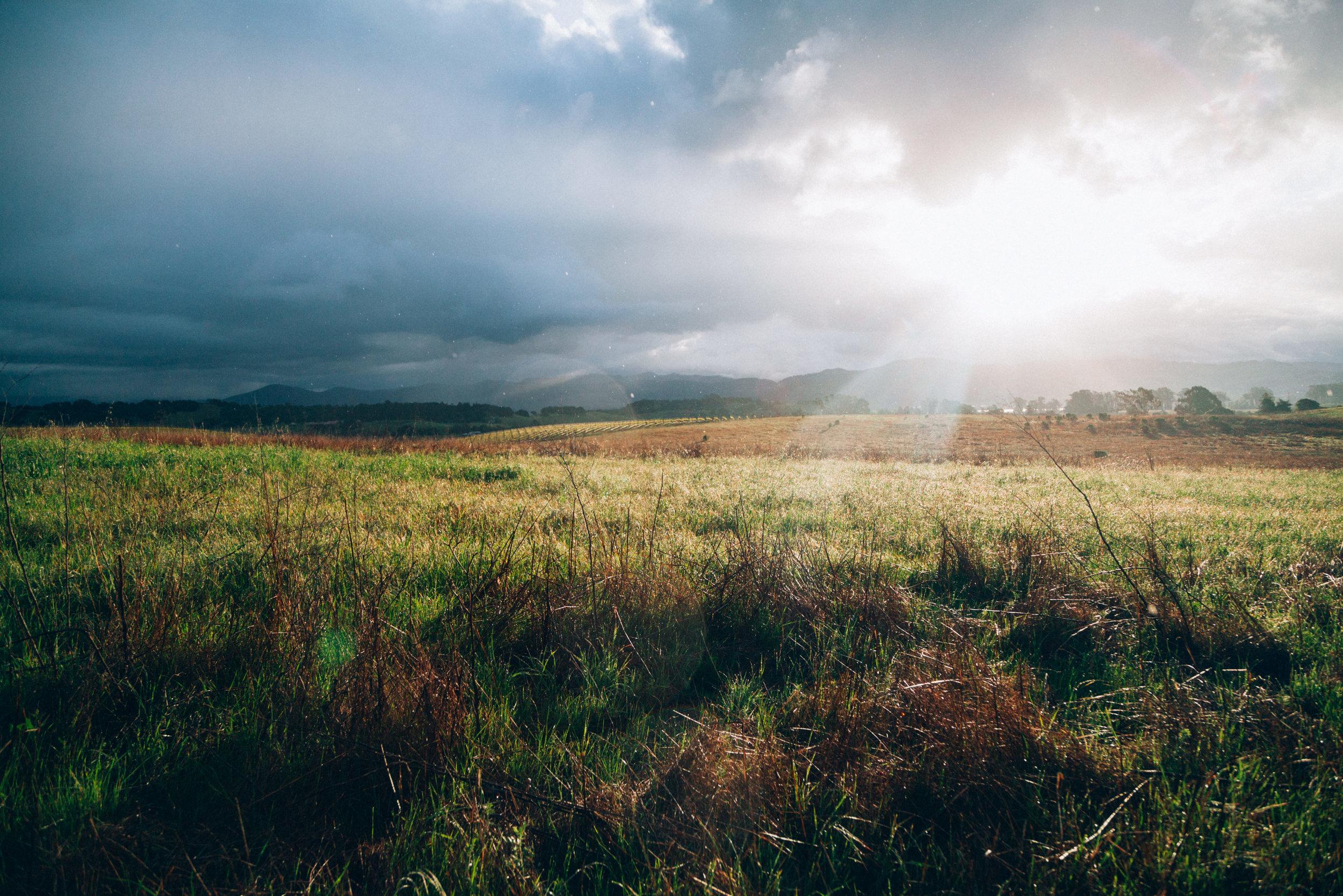 sunstreaks-field.jpeg