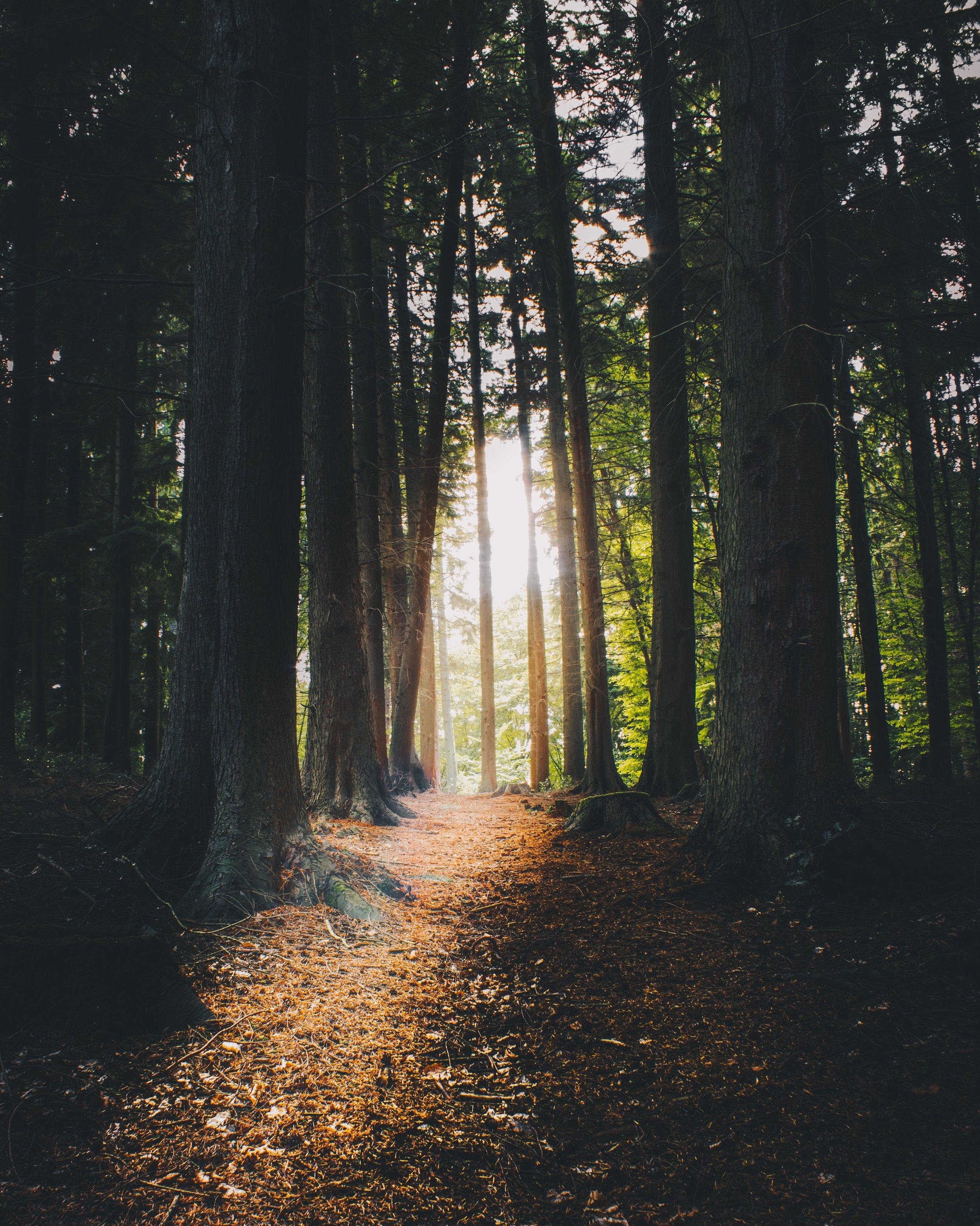 sunlit_forest_path.jpg