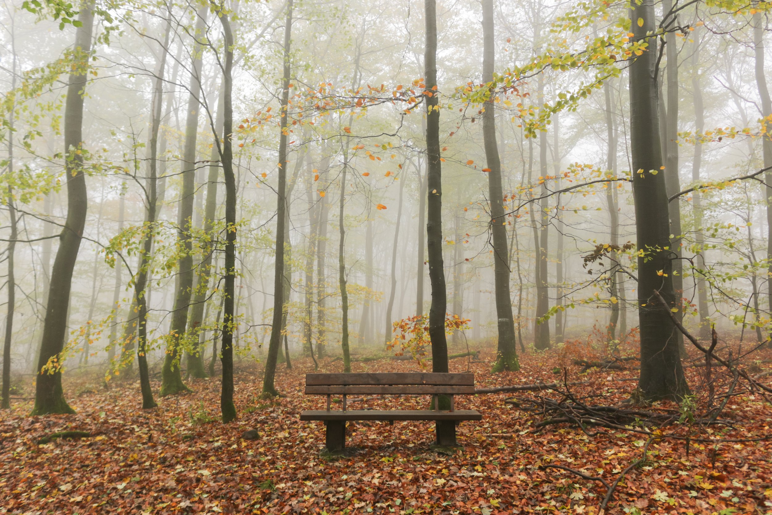 bench-in-misty-woods.jpg