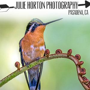 Julie Horton Photography.jpg