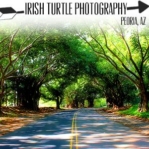 Irish Turtle Photography.jpg