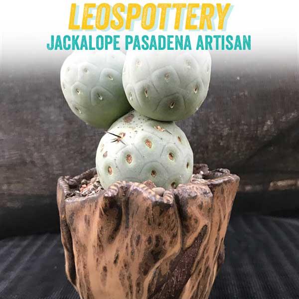 leospottery.jpg