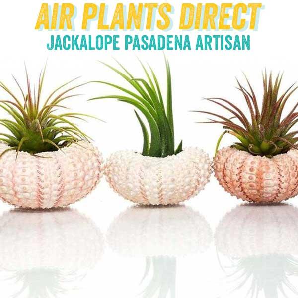 airplantsdirect.jpg