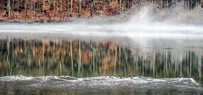 Foggy on the Pond
