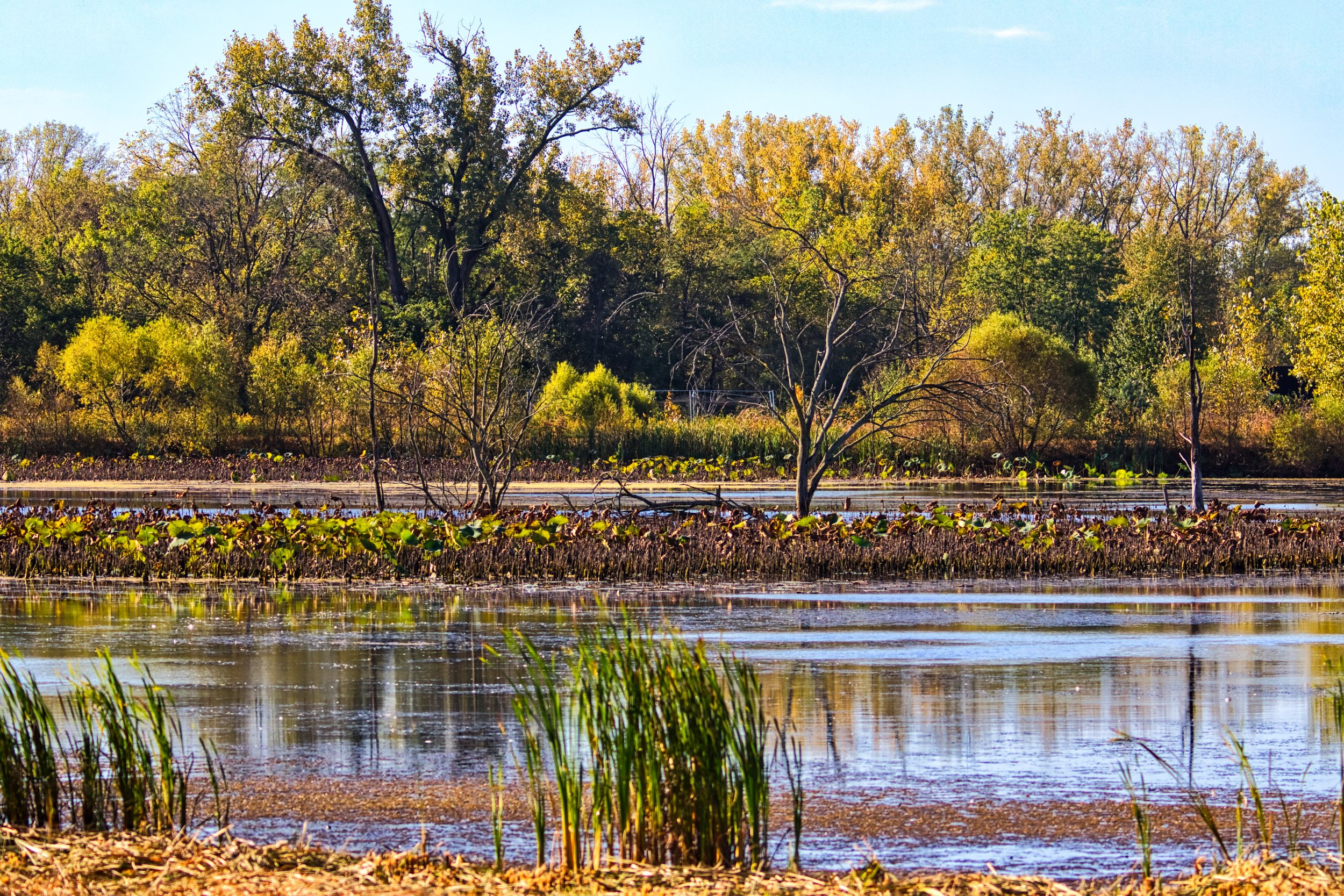 Pond at Pickerington Ponds