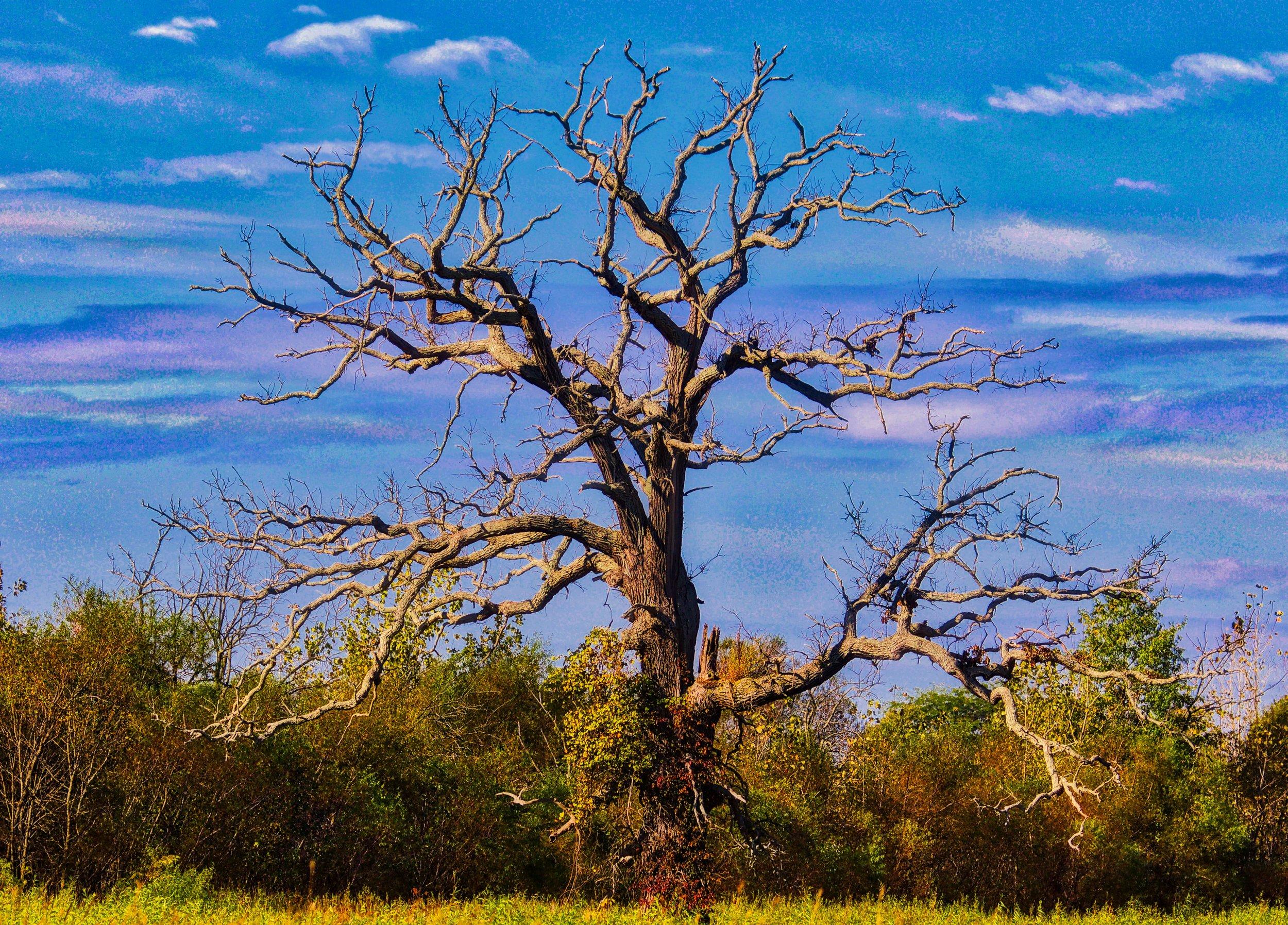 A Favorite Tree
