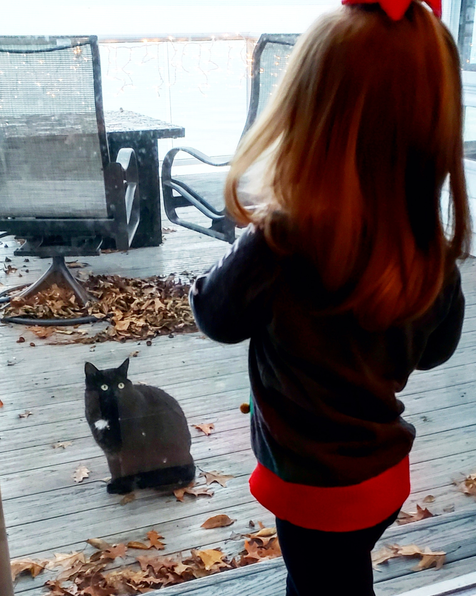 My niece Kayda meets my mother's feral cat friend, Miss Dot. Nov., 2018.