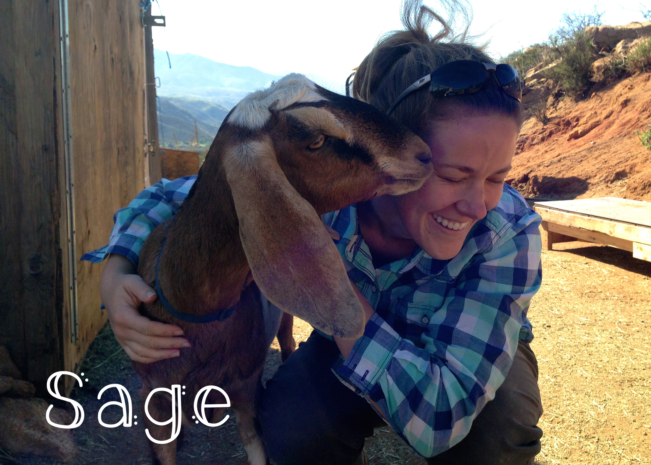 Sage – Sage is a yearling doe who hasn't been bred yet. Sage takes after her mom, Bree, quite a bit! She is sweet and has delicate features. Sage has already learned how to get up on the milk stand and stand quietly, and I can't wait to milk her next year.