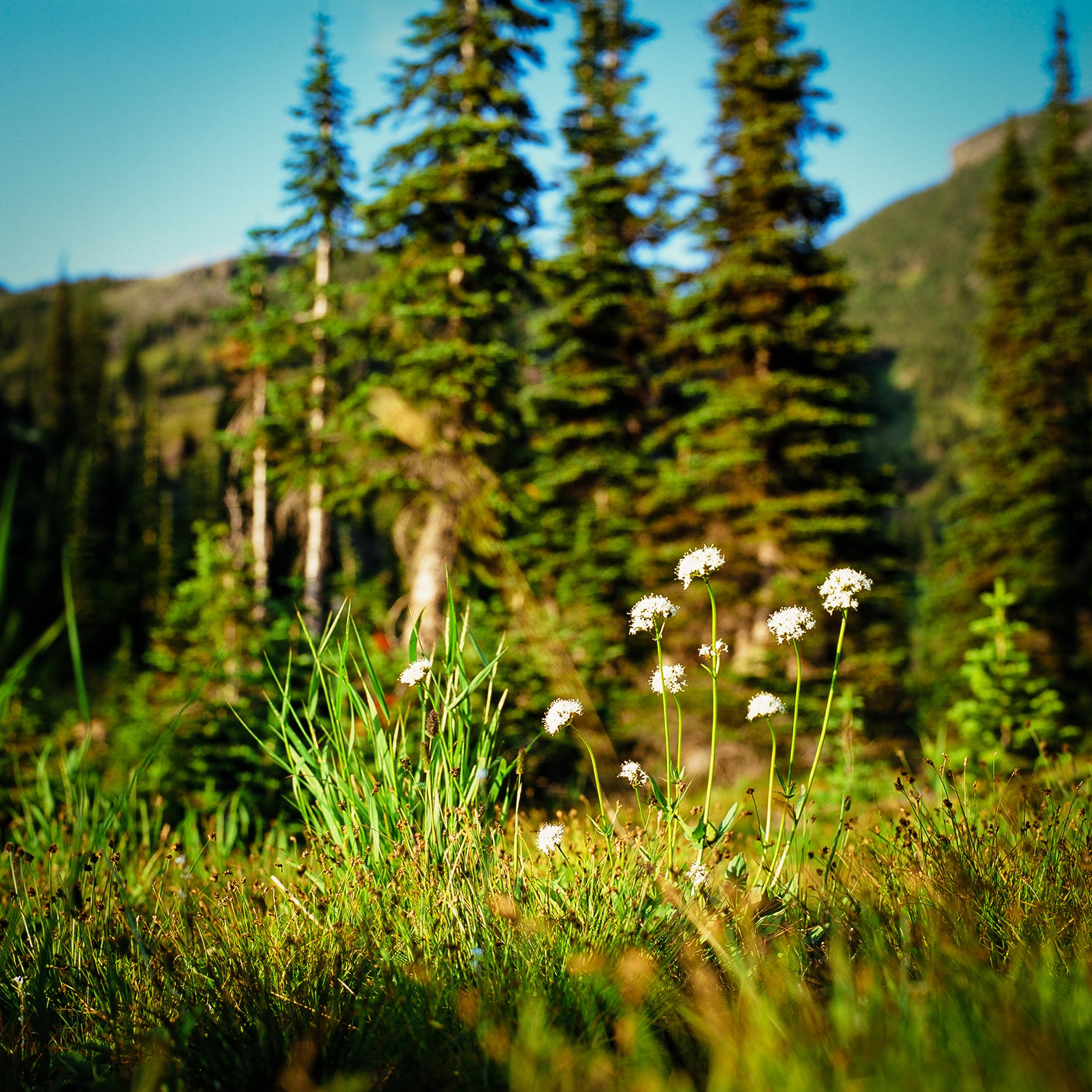 wildflower sentry.jpg