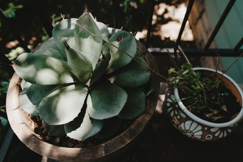 succelent plants in chico ca