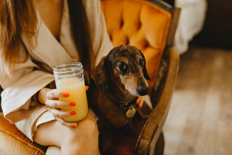 momosa and dachsund hound dog