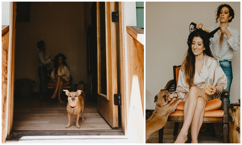 chihuahua in doorway