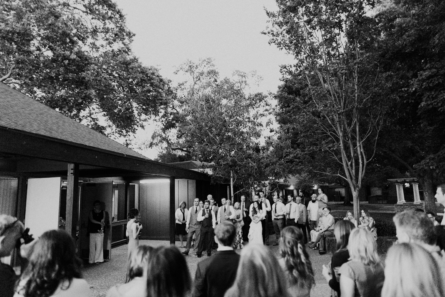 black and white toast picture at creekside rose garden