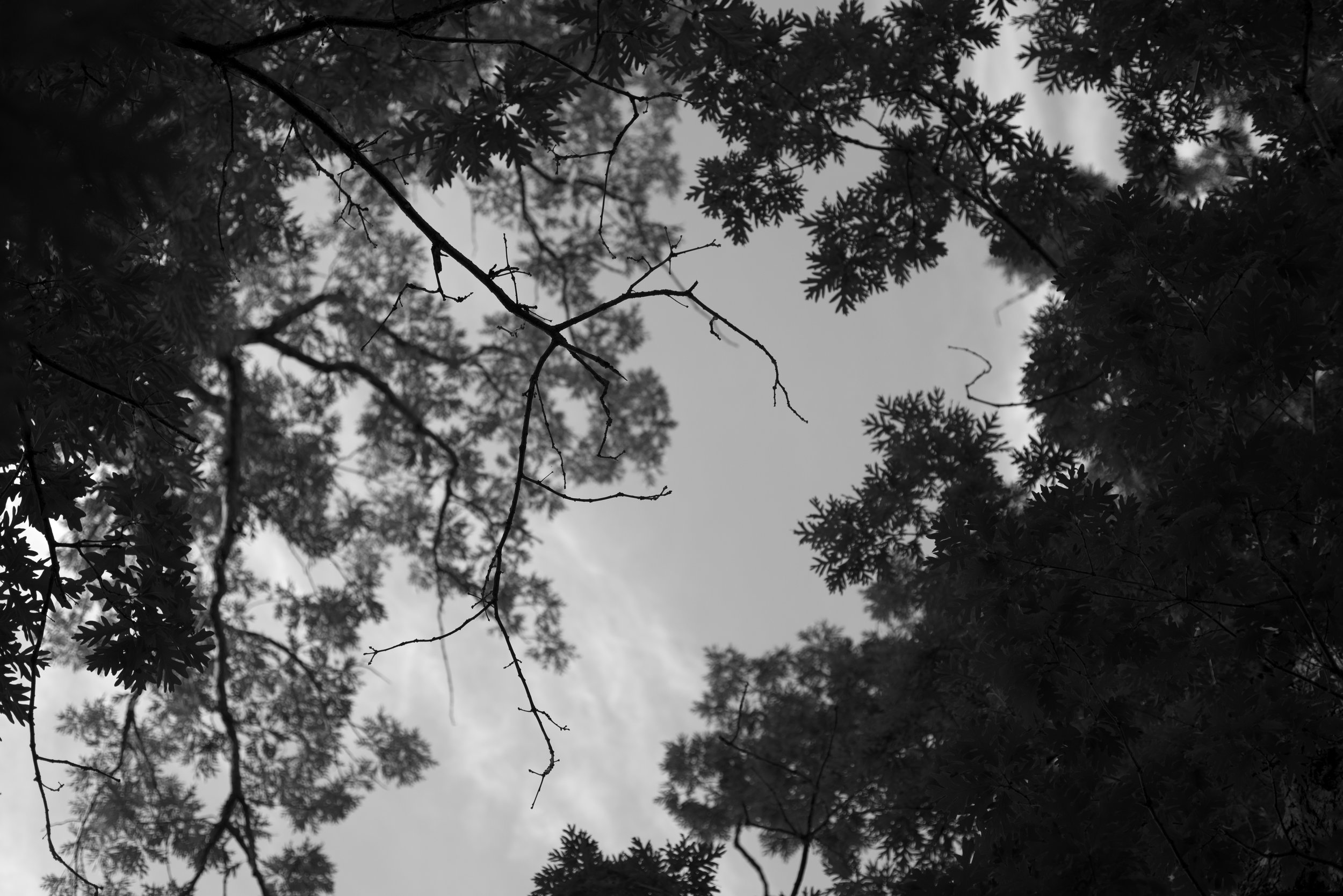 Silverwood Canopy Project 1_DSC6273.jpg